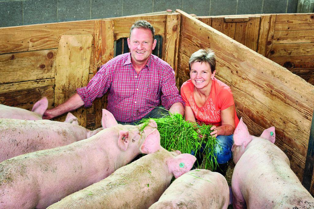 Bruno Und Christine Moosbrugger Sitzen Im Schweinestall Und Füttern Schweine Mit Gras