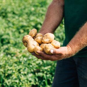Andreas Kalb, Ländle Kartoffel, Foto: Weissengruber