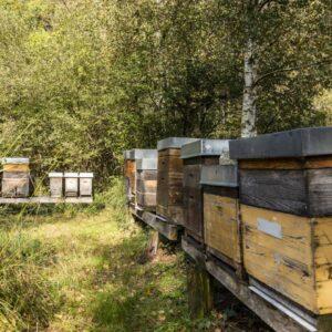 Königinnenzucht, Ländle Honig, Foto: Weissengruber