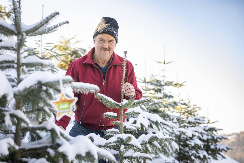 Konrad Bereuter Steht Hinter Einem, Mit Schnee Bedeckten Christbaum