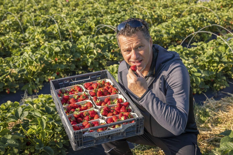 Wolfgang Karg Verköstigt Eine Seiner Ländle Erdbeeren, Außerdem Hält Er Eine Kiste Voller Erdbeeren In Seiner Hand