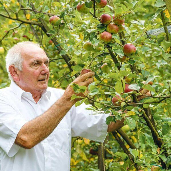 Ländle Apfel Produzent Toni Schiefer